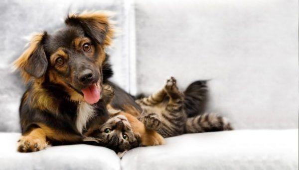 castracao-de-cachorro-gato-gratis-e1535298527418