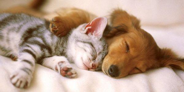 castracao-de-cachorro-gato-gratuita-e1535298502778