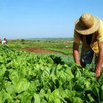 programa-nacional-de-reforma-agraria-150x150